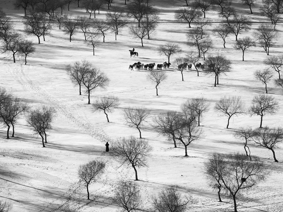 Horses and trees 103