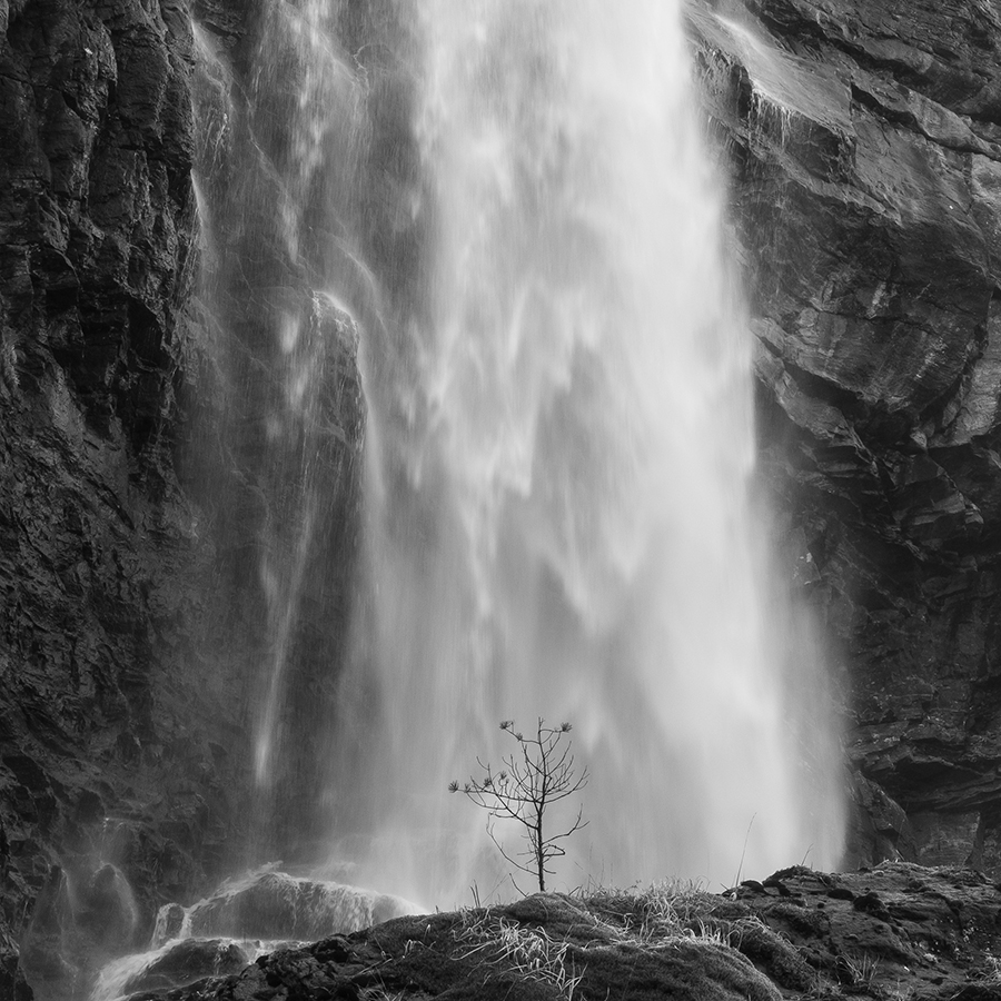 A litle tree in the waterfall 2