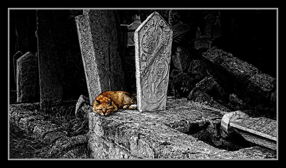 Nils-Erik Jerlemar_Cat on the Graveyard No 2