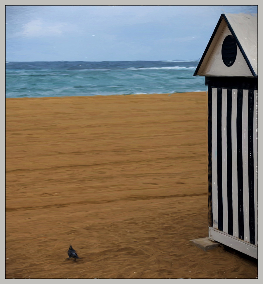 Pigeon on Beach
